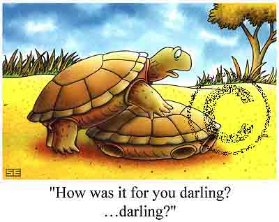 turtle sex cartoon funny Top 10 Worst Things to Say During Sex